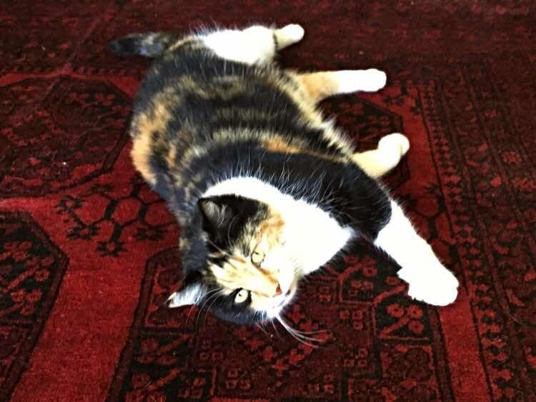 cat-jobs-rug-tester