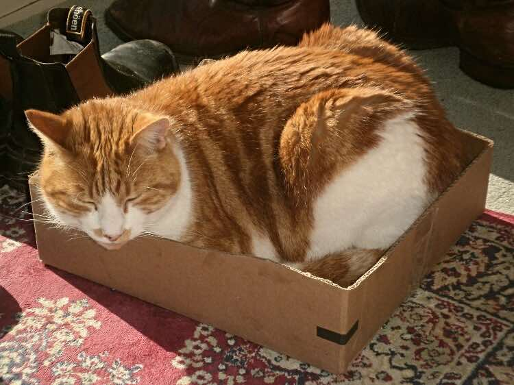 cats-in-boxes-Hector-fits