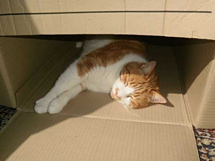 cats-in-boxes-Hector-sleeping