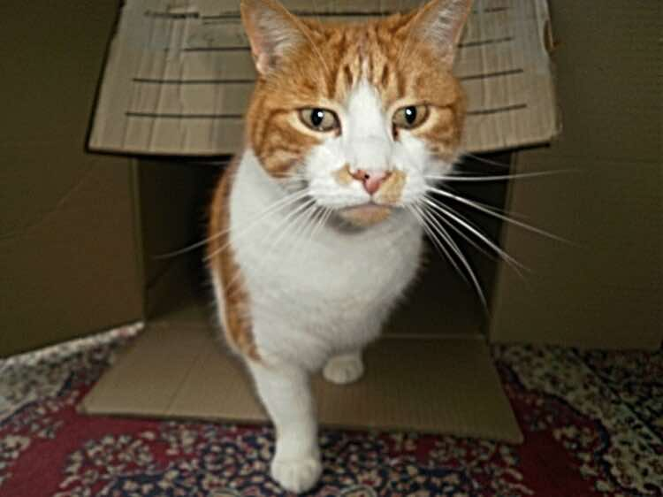 cats-in-boxes-orange-territory